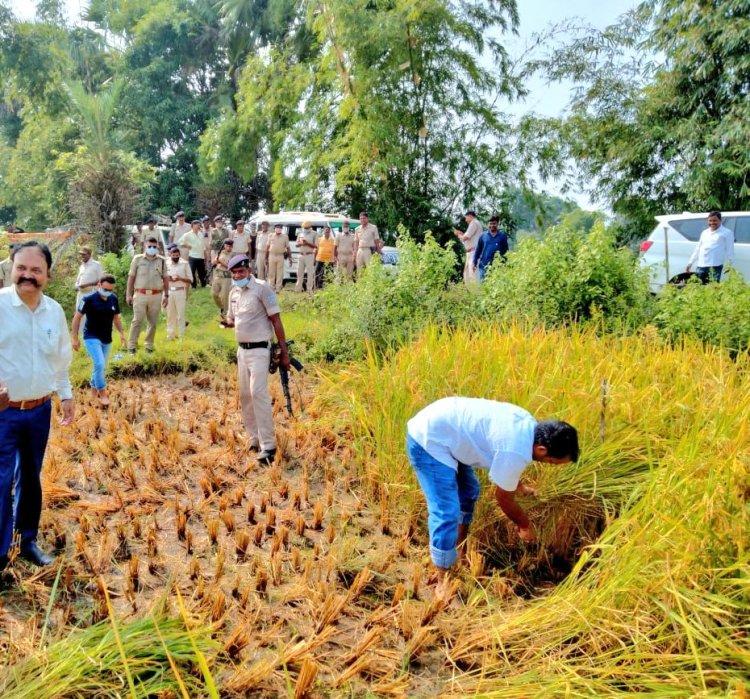 झारखंड: साहिबगंज डीसी ने खेत में की धनकटनी, बोले-किसान का बेटा हूं, किसानों को किया धान अधिप्राप्ति के लिए प्रेरित